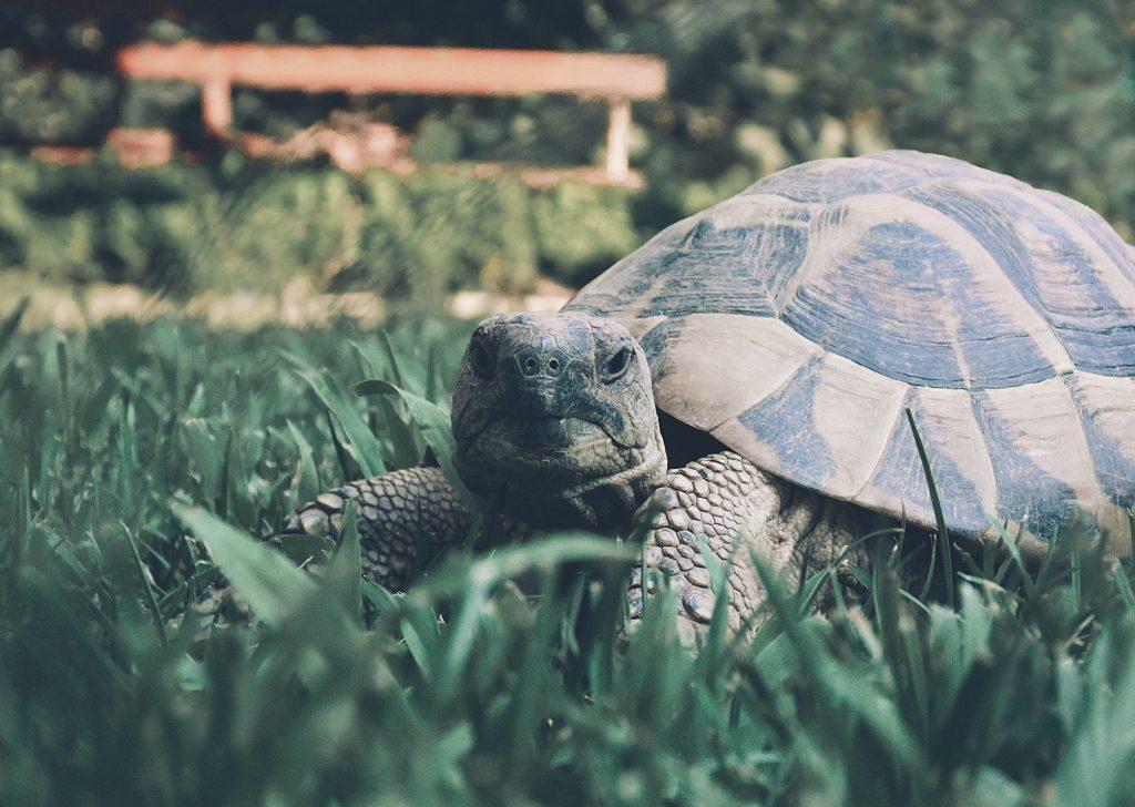 Jaki jest żółw każdy widzi
